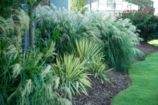 Maidengrass and 'Color Guard' Yucca