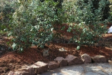 Flagstone path with rock edge