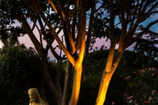Uplighting of crapemyrtle and statue